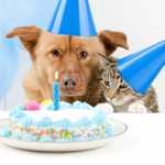 Liebevolle Sprüche Zum Geburtstag | alexisaltest